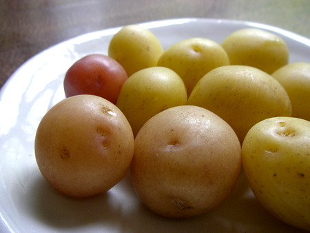 all_potato.jpg